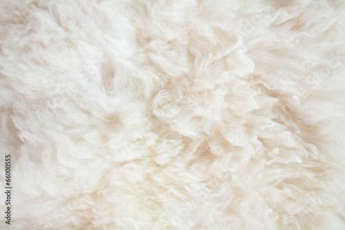 Fototapeta sheep wool background