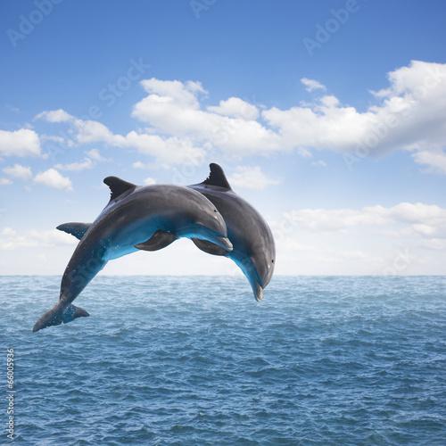 Foto op Plexiglas Dolfijnen two jumping dolphins
