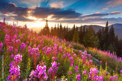 piekny-jesienny-krajobraz-w-gorach-z-rozowymi-kwiatami