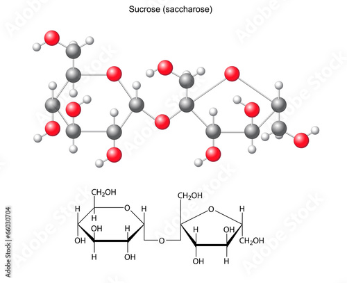 Structural chemical formula and model of sucrose (saccharose) Canvas Print