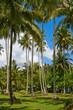 Palm trees and beach, Thailand.