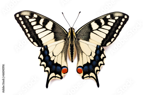 Papiers peints Papillon Butterfly Papilio machaon