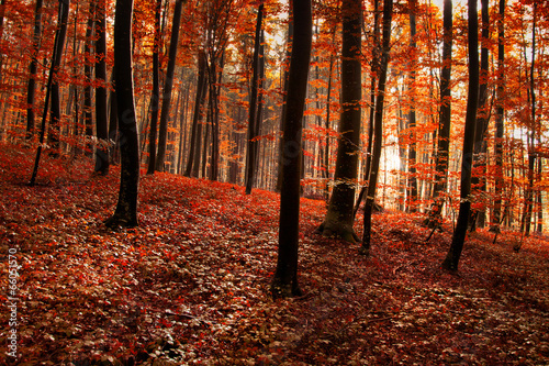 Foto auf Gartenposter Violett rot Red orange forest background