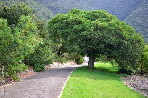 Foto op Canvas Tuin Path in Kirstenbosch National Botanical Garden