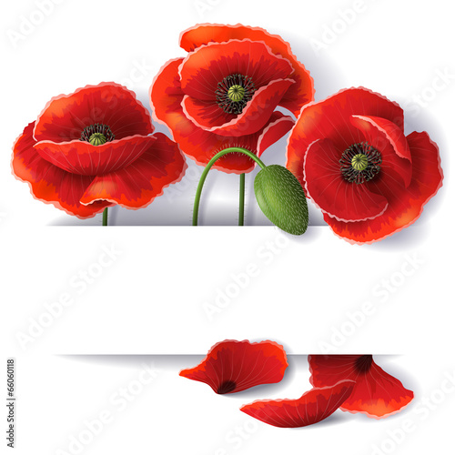Red poppy flowers buy this stock vector and explore similar red poppy flowers mightylinksfo
