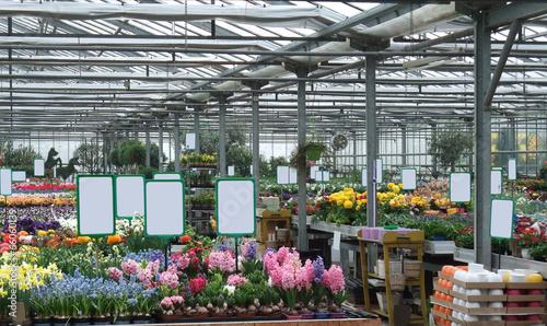 Deurstickers Waterlelies Greenhouse