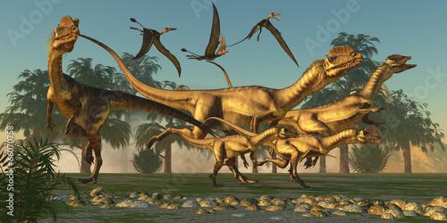 Fotografie, Obraz  Dilophosaurus Hunt