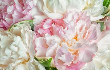 Panel Szklany Podświetlane Popularne Blooming peonies