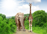 Fototapeta Sawanna - Giraffe and elephant in Kruger park South Africa
