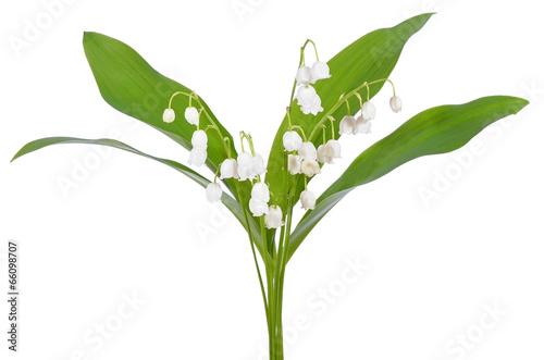 Crédence de cuisine en verre imprimé Muguet de mai Convallaria majalis flowers