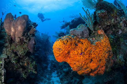 Poster Caraïben Caribbean Coral Reef 6