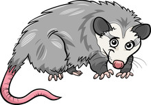 Opossum Animal Cartoon Illustr...