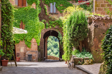 Fototapeta Uliczki Ancient city overgrown with ivy in Tuscany