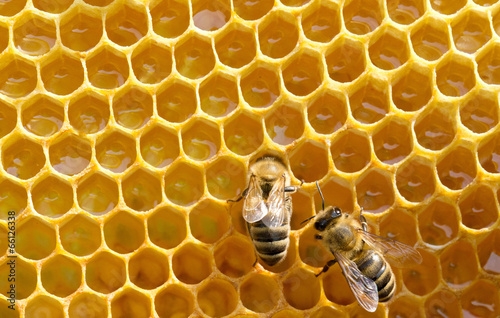 Papiers peints Bee bees on honeycells