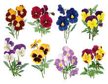 Set Of Multicolored Pansies