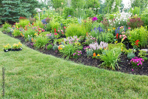 Canvas-taulu Lush flowerbed with colorful flowering celosia