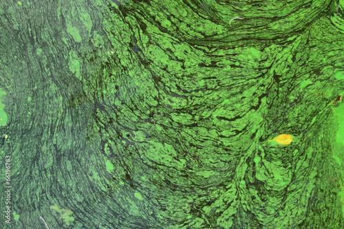 Green algae abstract Wallpaper Mural