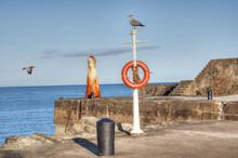 Lifebuoy And Seagulls