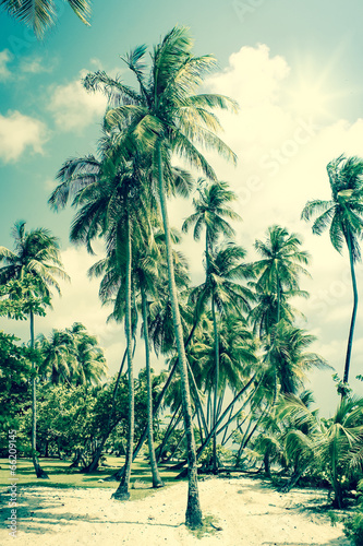 Garden Poster Retro Tropical Island with palm trees