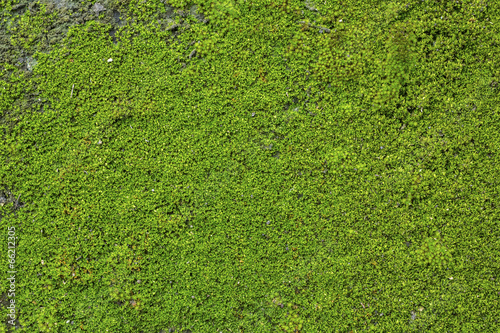 Fotografie, Obraz  Old Wall Brick With Moss
