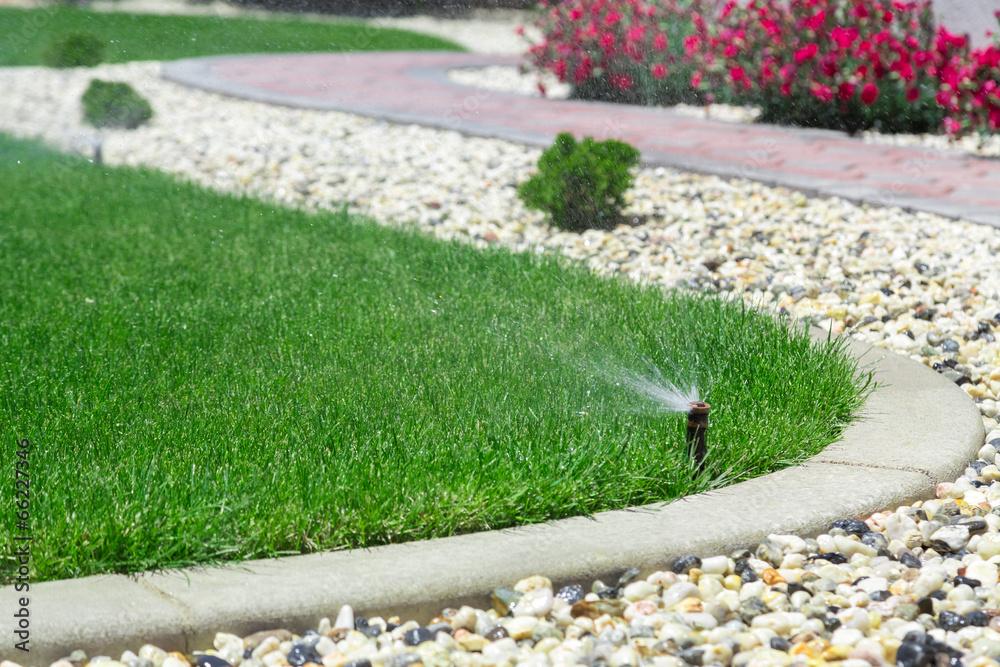 Fototapety, obrazy: Sprinklers watering grass