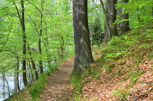 Waldweg © alisseja