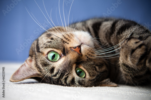 Photographie Rolling cat cute green eyes looking