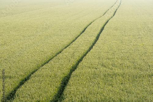 Photo Tire tracks through the cornfield