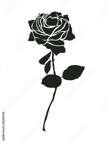 czarna-roza