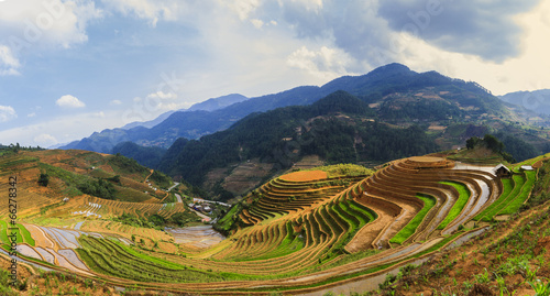 Garden Poster Rice fields terraced rice field