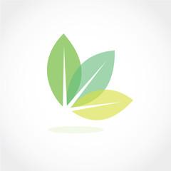 Fototapeta leaf icon vector