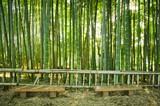 Ławki w bambusowym lesie