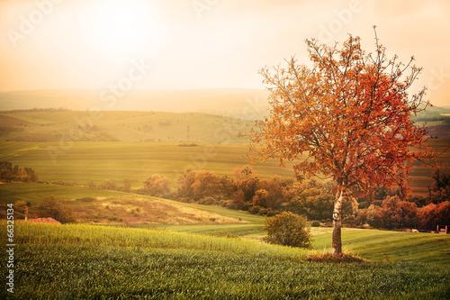 Foto auf Gartenposter Landschappen Tree on the meadow