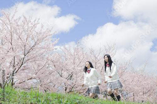 Deurstickers Kersen 桜をバックに走る高校生