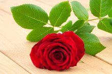 Bright Red Rose On Wood Backgr...