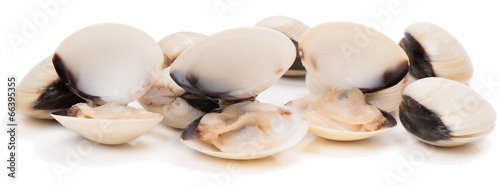 Poster Coquillage fresh clams