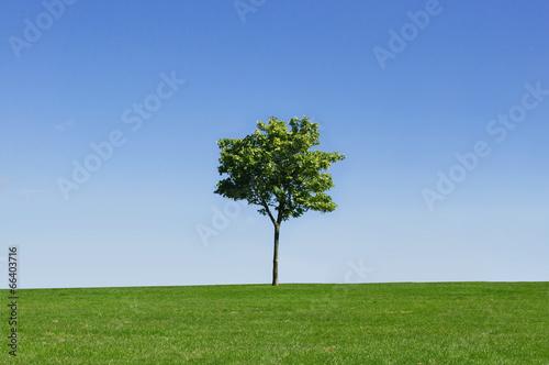 Foto auf Gartenposter Landschappen Tree in a field