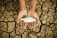 Hand Holding A Dead Fish Over Cracked Earth