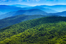 Forest In Carpathians Landscape. Mountains Panorama Background.