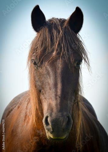 Photo  Wonderful closeup photo of brown horse muzzle