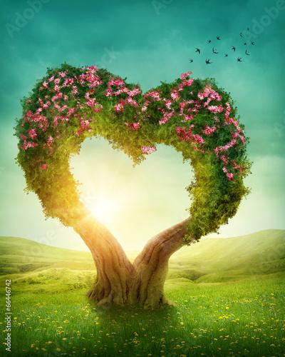 drzewo-w-ksztalcie-serca