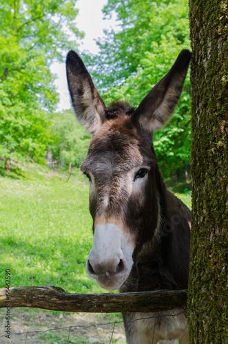 Deurstickers Ezel donkey in the park