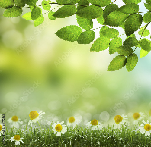 Staande foto Lente Spring or summer heat abstract .chamomile flower