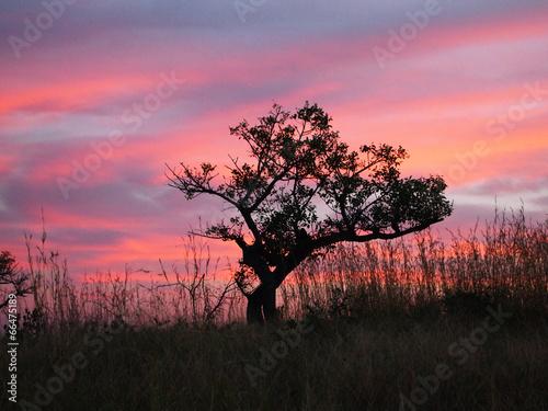 Foto op Plexiglas Zuid Afrika Sunset in Kruger National Park. Lonely tree.