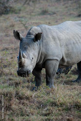 In de dag Neushoorn rhino