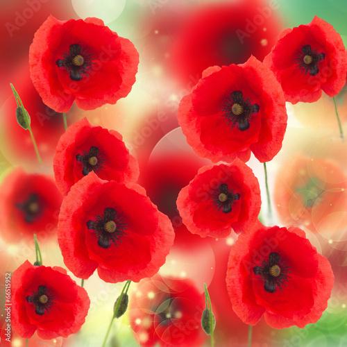 Cadres-photo bureau Poppy field of poppy flowers