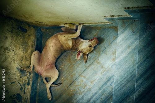 Fototapety, obrazy: portrait of funny sleepling pet dog