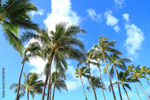 Papiers peints Palmier ハワイのヤシの木と青空