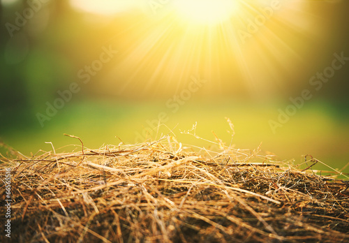 Fotografie, Tablou natural summer background. hay and straw in  sunlight