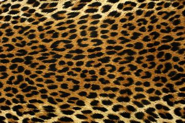 Fototapeta Leopard Spots